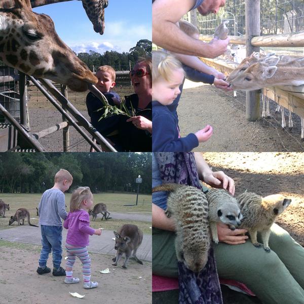Feeding-the-animals-Mogo-Zoo