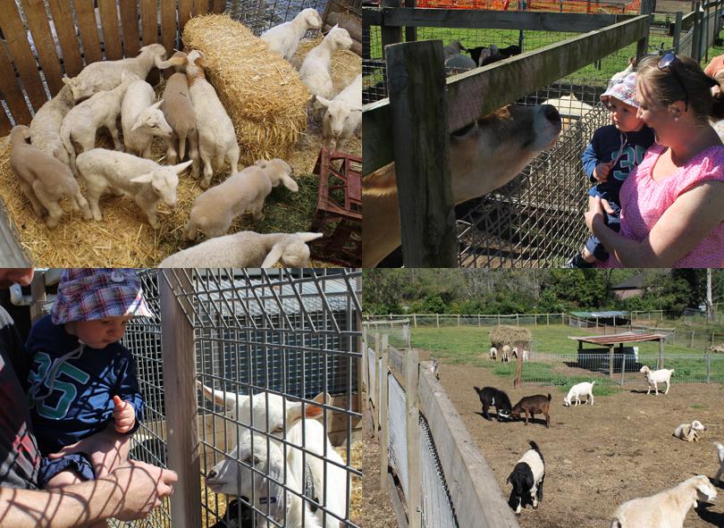 Collage-Farm-