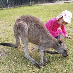 Places in the Hills and surrounds to visit animals