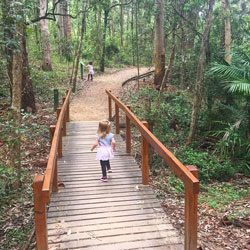 Cumberland State Forest | West Pennant Hills | Bushwalks for kids