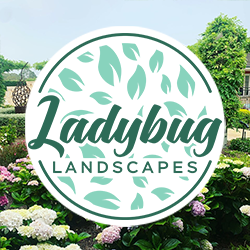 Take care of your garden in Winter with Ladybug Landscapes